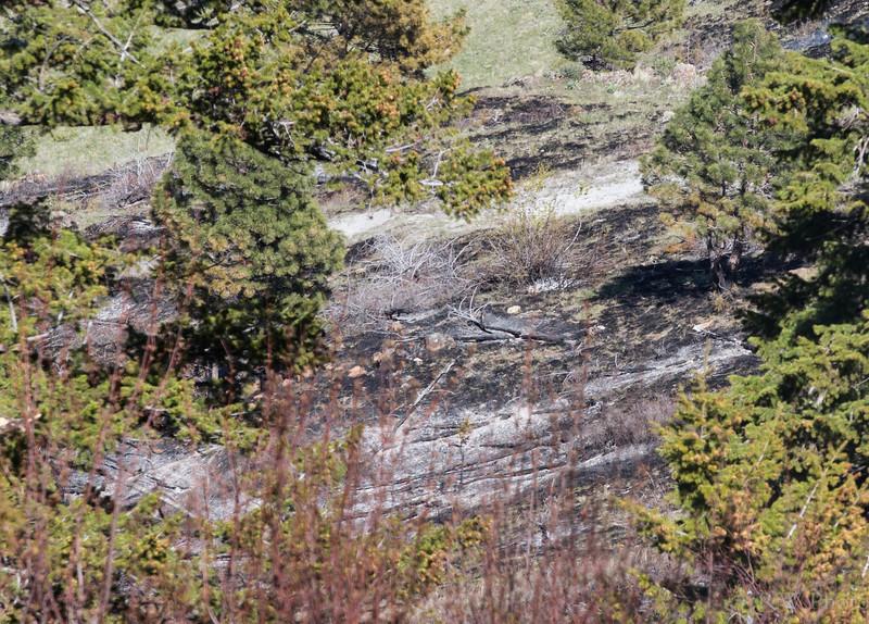 Prescribed burn on Antleope ridge.