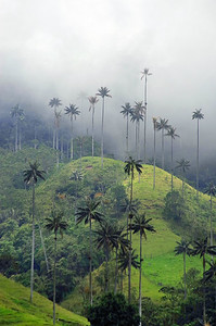 Cloudy landscape on Cocora valley in Cordiliera Central, Salento, Colombia, South America