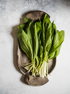 Bunch Fresh Harvest Of Spring Ramson Or Wild Leek Herb Leaves Bunch On Rustic Wooden Tray On Grey Ba