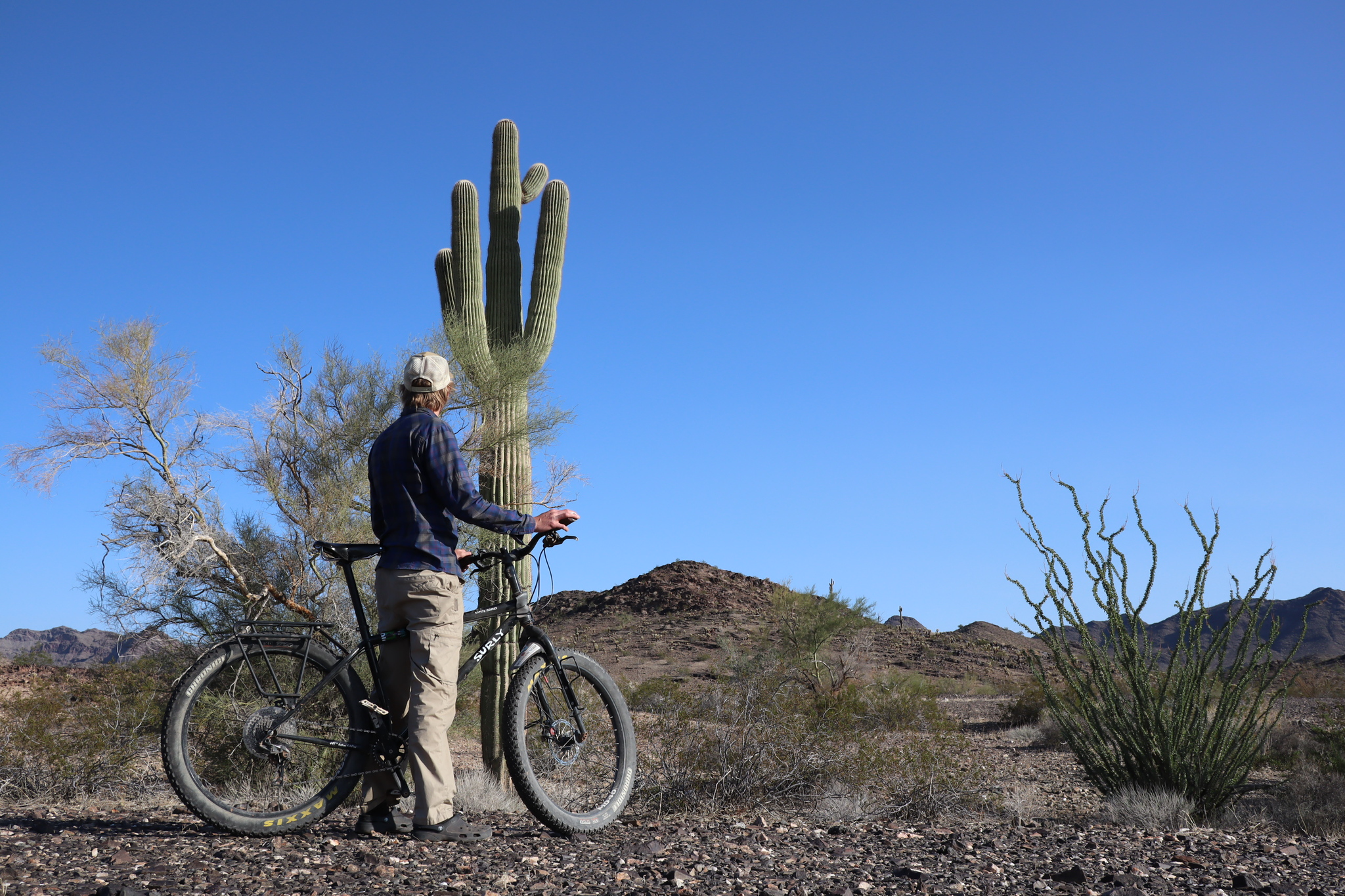 Adam looking at a saguaro