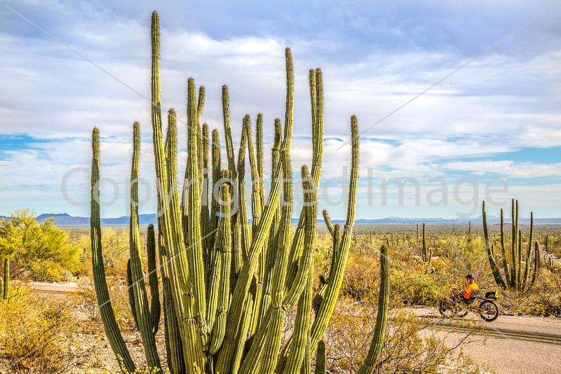 Organ Pipe National Monument in Arizona - C3-0096 - 72 ppi