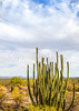 Organ Pipe National Monument in Arizona - C3-0103 - 72 ppi