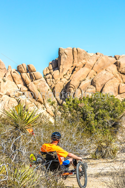 Joshua Tree National Park - 2016 -D1- C1-0003 - 72 ppi
