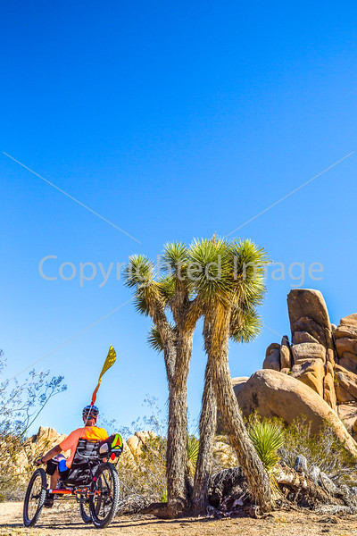 Joshua Tree National Park - 2016 -D1- C2-0081 - 72 ppi