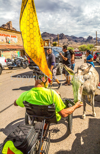 Route 66 in Oatman, AZ - C3-0175 - 72 ppi