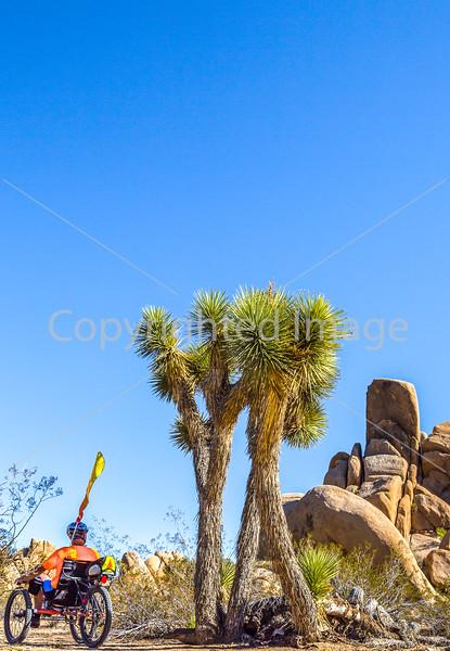 Joshua Tree National Park - 2016 -D1- C2-0083 - 72 ppi