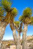 Joshua Tree National Park - 2016 -D1- C2-0099 - 72 ppi