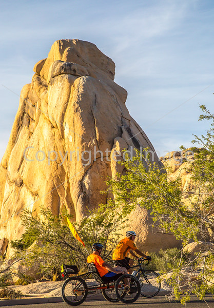 Joshua Tree National Park - 2016 - C3-0321 - 72 ppi