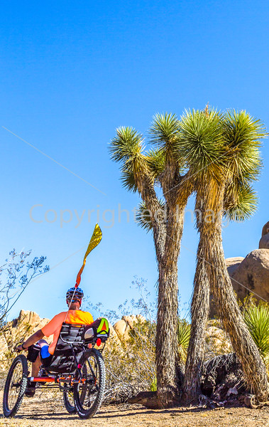 Joshua Tree National Park - 2016 -D1- C2-0081 - 72 ppi-2