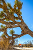 Joshua Tree National Park - 2016 -D1- C2-0020 - 72 ppi