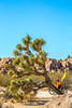 Joshua Tree National Park - 2016 -D1- C3-0021 - 72 ppi