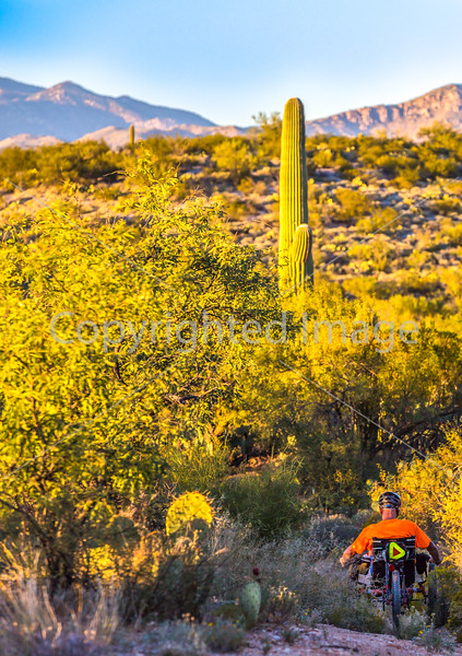 Saguaro National Park - C1-0189 - 72 ppi-2