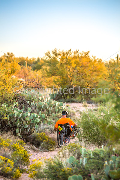 Saguaro National Park - C1-0304 - 72 ppi