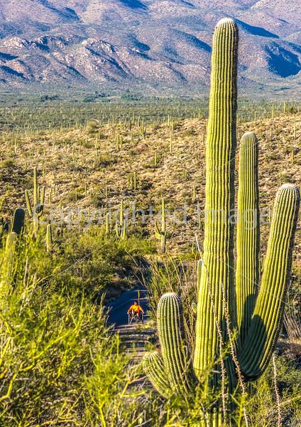 Saguaro National Park - C2-0005 - 72 ppi