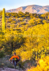Saguaro National Park - C1-0189 - 72 ppi-3