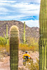 Organ Pipe Cactus National Monument - D1-C1-0109 - 72 ppi