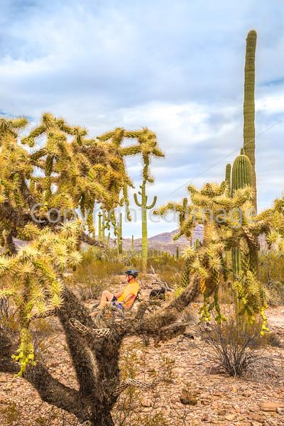 Organ Pipe Cactus National Monument - D1-C2-0081 - 72 ppi