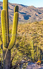 Saguaro National Park - C1-0071 - 72 ppi-2