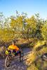 Saguaro National Park - C3-0001 - 72 ppi