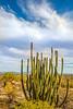 Organ Pipe Cactus National Monument - D1-C2-0128 - 72 ppi