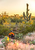 Saguaro National Park, Cactus Forest Trail - C1-0347 - 72 ppi