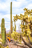 Organ Pipe National Monument in Arizona - C3-0085 - 72 ppi