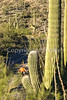 Saguaro National Park - C1-0022 - 72 ppi