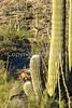 Saguaro National Park - C1-0022 - 72 ppi