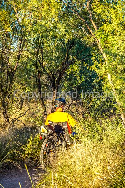 Saguaro National Park - C3-0012 - 72 ppi