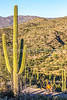 Saguaro National Park - C2-0086 - 72 ppi