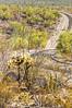 Organ Pipe Cactus National Monument - D1-C1-0492 - 72 ppi-3