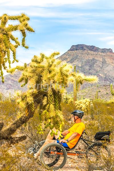 Organ Pipe National Monument in Arizona - C1-0098 - 72 ppi