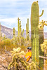 Organ Pipe Cactus National Monument - D1-C1-0088 - 72 ppi