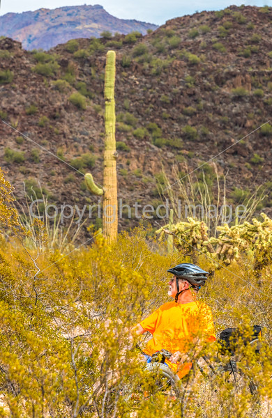 Organ Pipe Cactus National Monument - D1-C1-0060 - 72 ppi