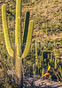Saguaro National Park - C2-0101 - 72 ppi-2