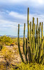 Organ Pipe Cactus National Monument - D1-C2-0121 - 72 ppi-2