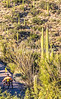Saguaro National Park - C2-0108 - 72 ppi-2