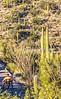 Saguaro National Park - C2-0108 - 72 ppi-2