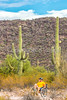 Organ Pipe Cactus National Monument - D1-C1-0039 - 72 ppi
