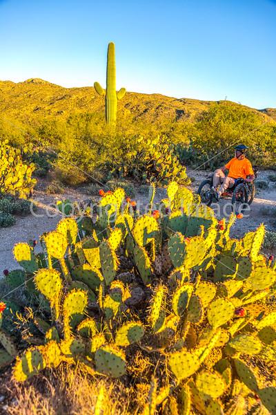 Sunset on mountain bike trail at Saguaro Nat'l Park - C3-0023 - 72 ppi