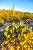 Sunset on mountain bike trail at Saguaro Nat'l Park - C3-0023 - 72 ppi