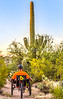 Saguaro National Park - C1-0256 - 72 ppi-2