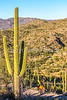Saguaro National Park - C2-0077 - 72 ppi