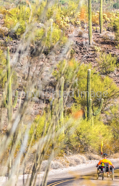 Organ Pipe Cactus National Monument - D1-C1-0275 - 72 ppi-2