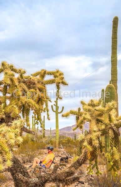 Organ Pipe Cactus National Monument - D1-C2-0081 - 72 ppi-2