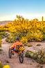 Saguaro National Park - C3-2 - 72 ppi-8