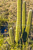 Saguaro National Park - C2-0005 - 72 ppi-2