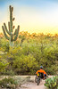 Saguaro National Park - C1-0354 - 72 ppi