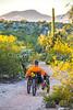 Saguaro National Park - C1-0220 - 72 ppi