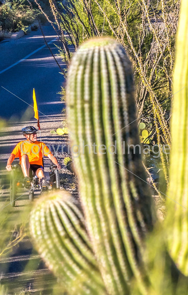 Saguaro National Park - C2-0020 - 72 ppi-2